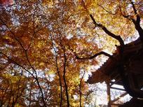 kyoto_himeji20070000.jpg