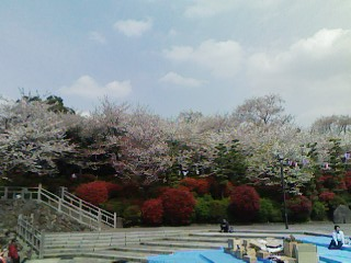 sakura_asukayama.jpg